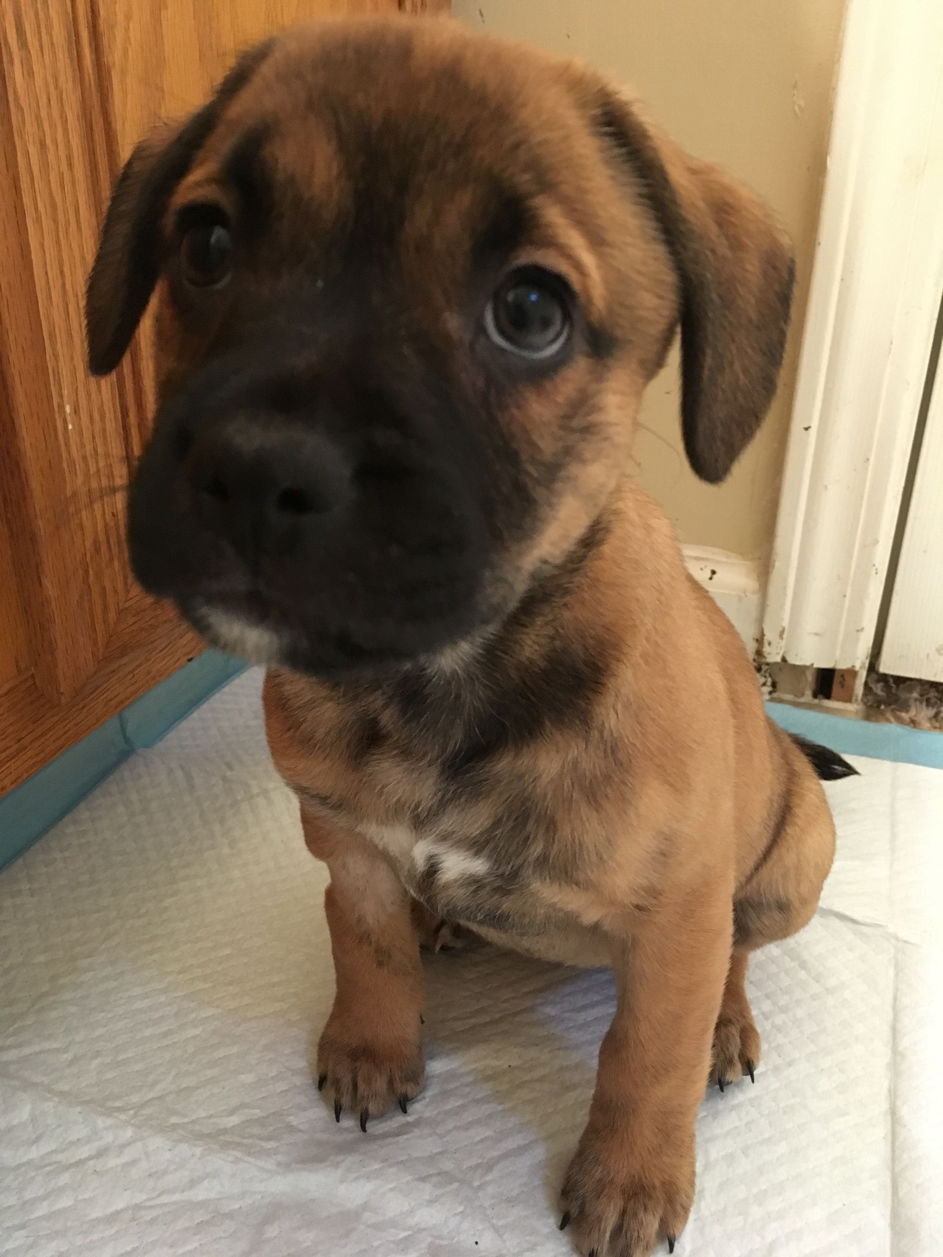 Adopt Tulip on Humane society, Puppies, Dogs