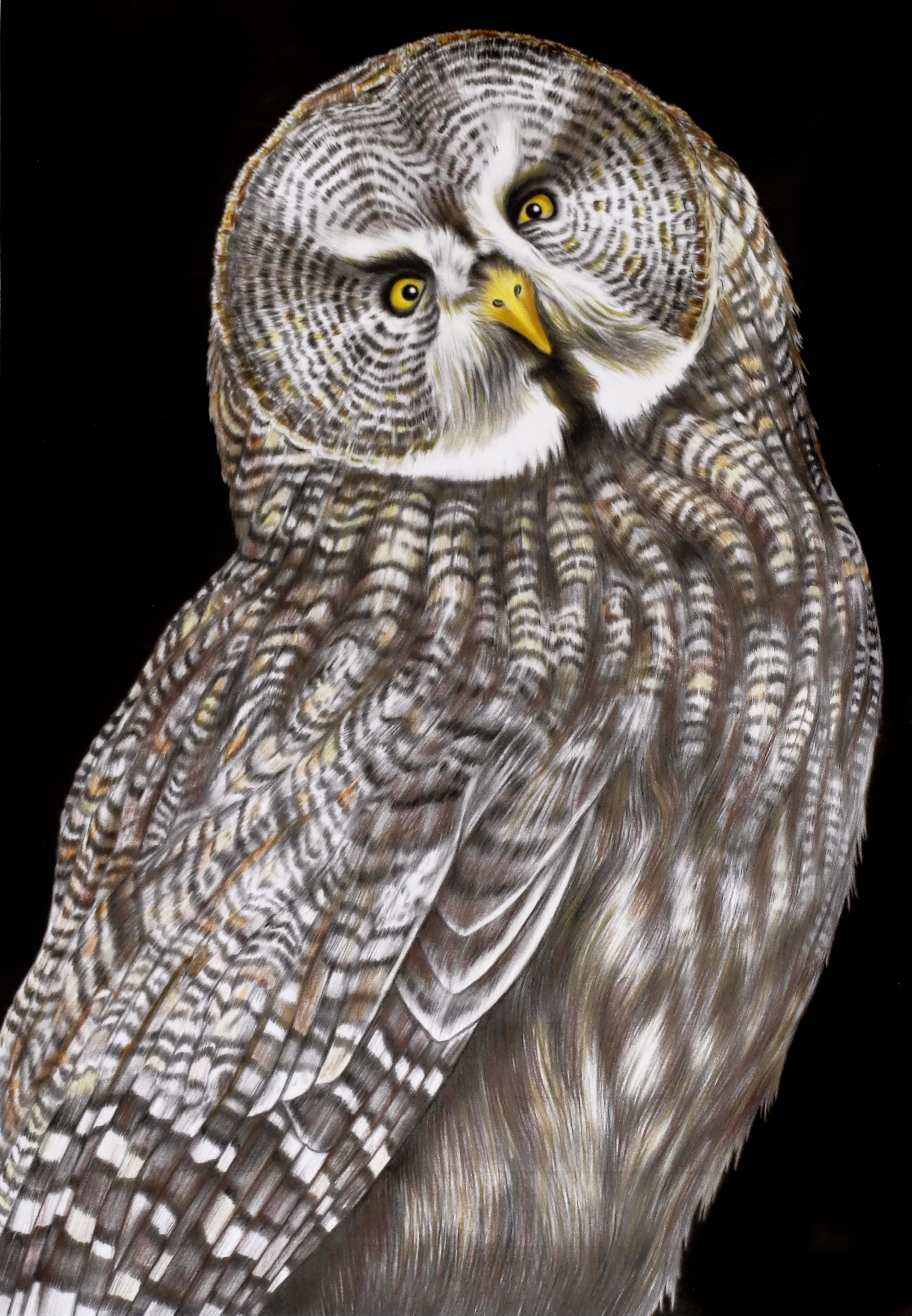 Great Grey Owl That I Coloured From Intricate Ink Animals In Detail By Tim Jeffs Volume 2 Roofvogels Kleurplaten