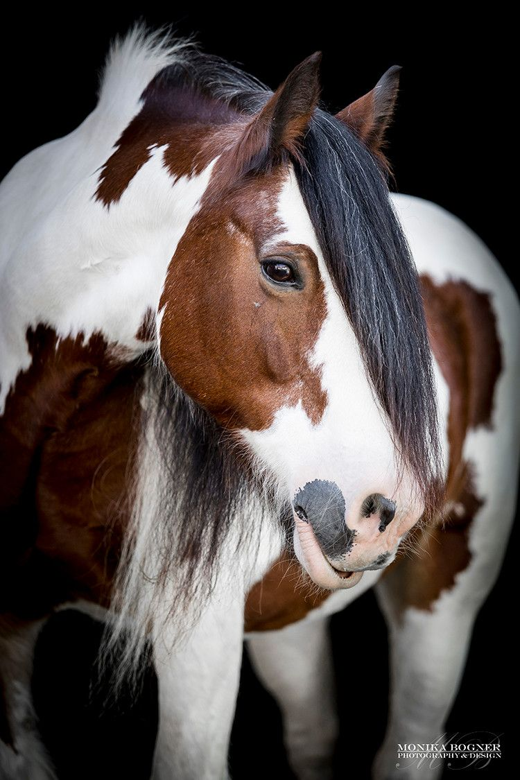 Pferdefotografie Hundefotografie Mit Liebe Zu Pferde Und Hunde Unvergessliche Momente In Bildern Festgehalten Pferde Pferde Und Hunde Pferde Fotografie