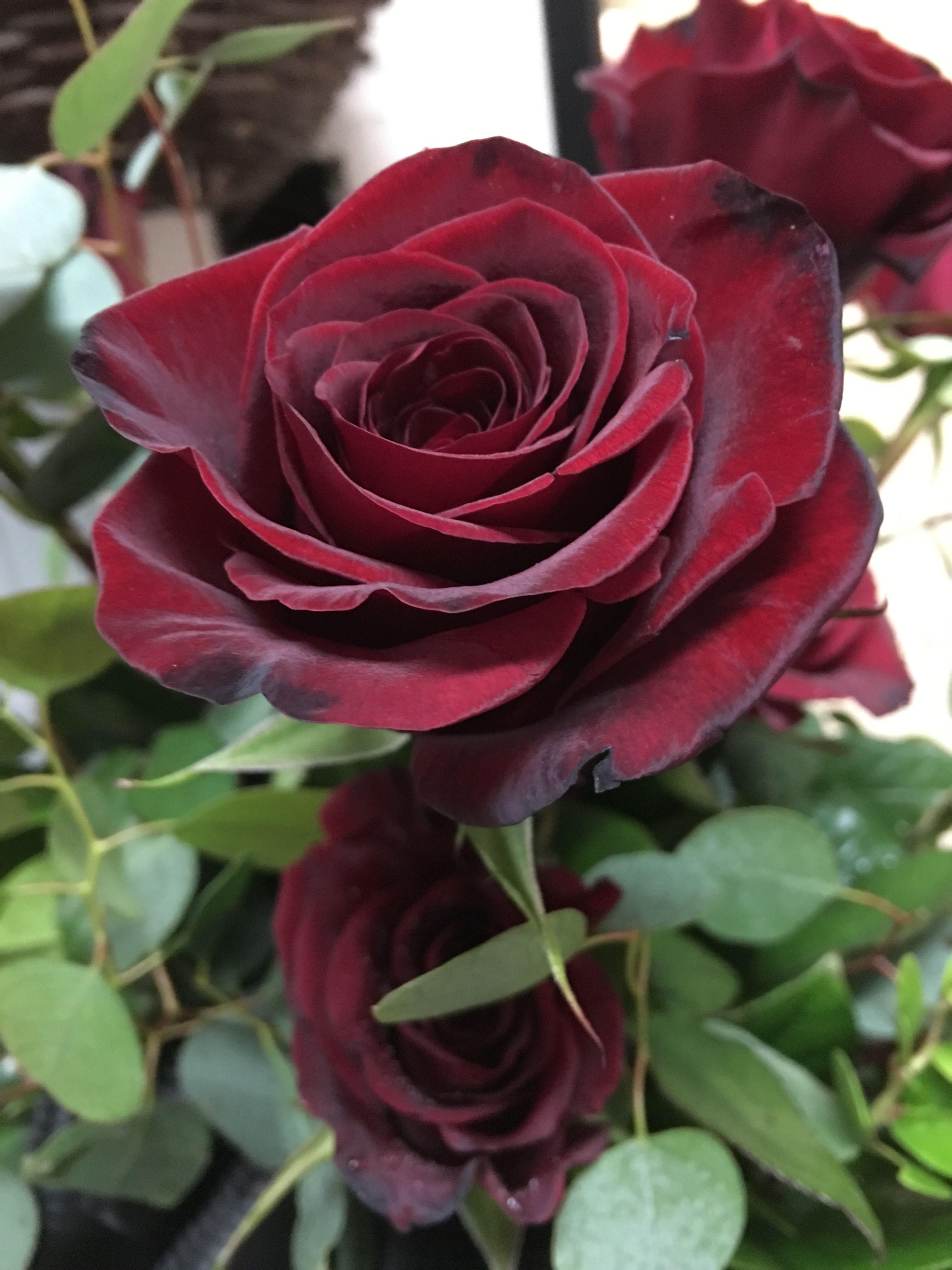 розы блэк бордо фото подборку картинок открыток