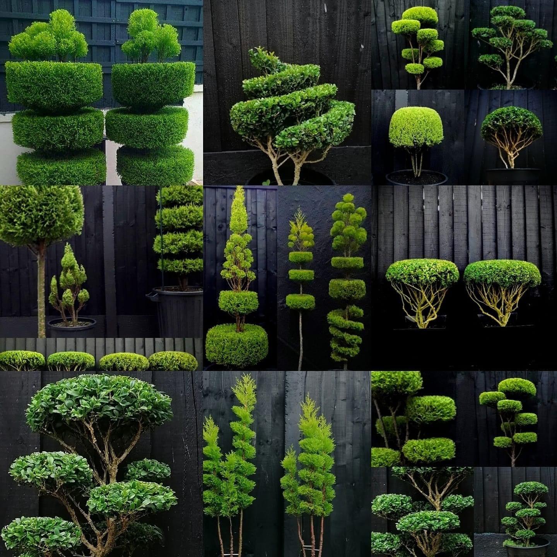 Pin Auf Garten Pflanzen