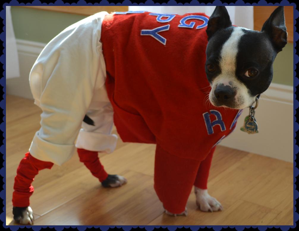 boston red sox dog made in america animal costumesdog costumescostume ideas halloween - Halloween Costumes In Boston