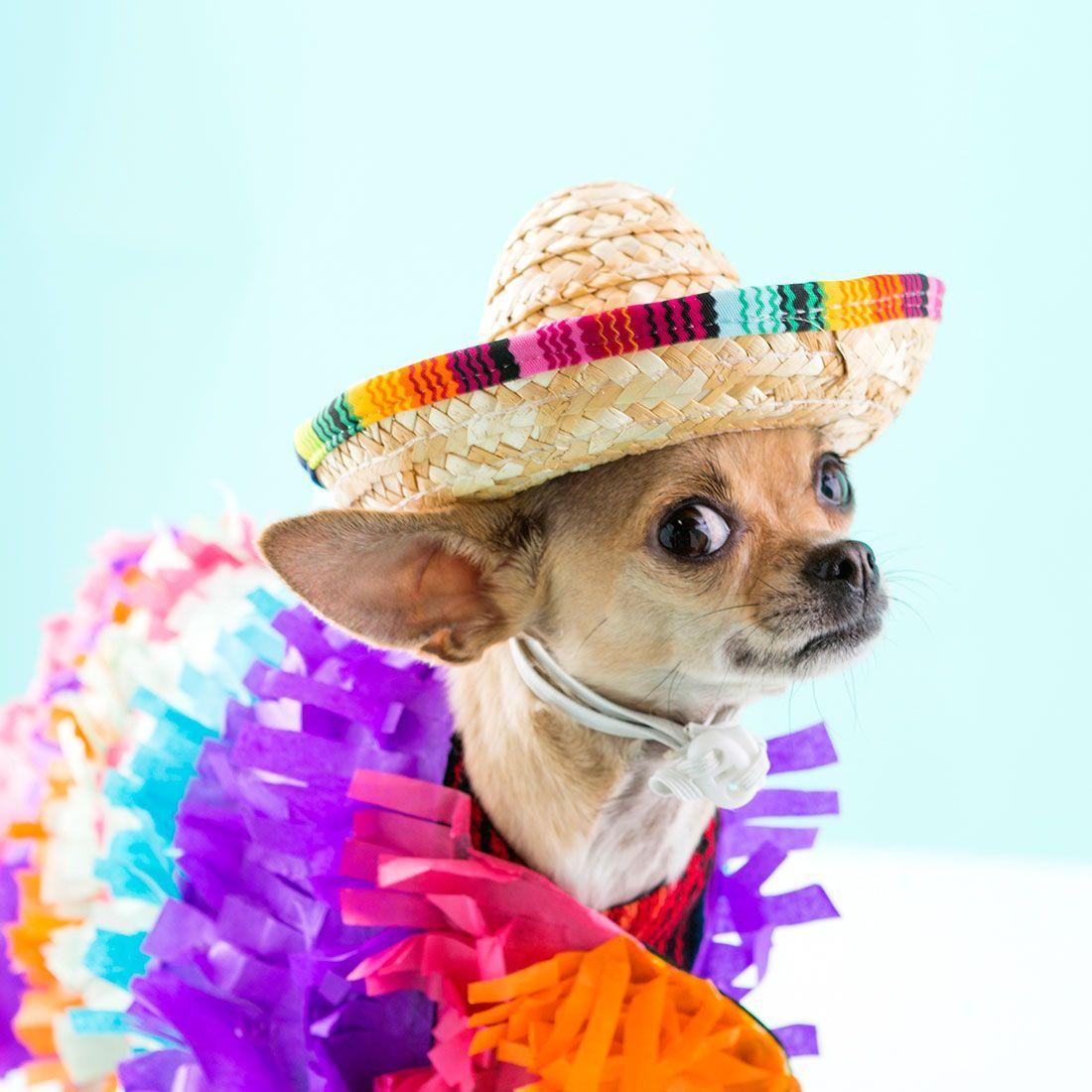 DIY Dog Pinata Costume via Brit + Co