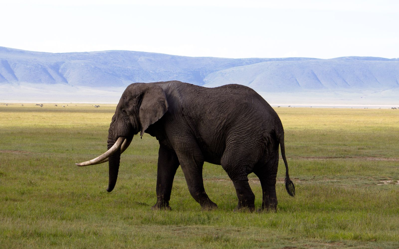 There Is Hope After All! Large Hong Kong Retailer Decides to Stop Selling Ivory