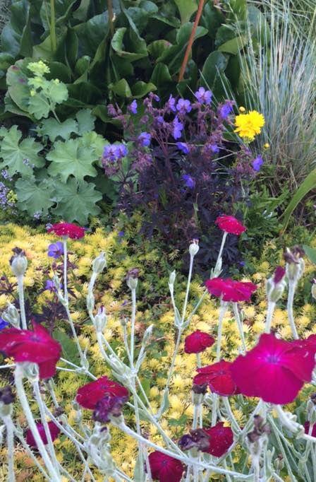 Mobile Uploads Backyardgardener Com Your Backyard Gardening Source Xeriscape Garden Chic Wild Flowers