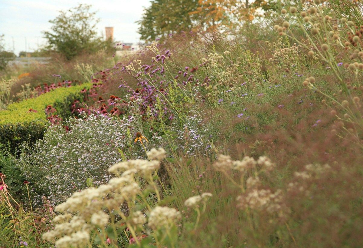 Sarah Price Landscapes Olympic Gardens North America Sensory Garden Olympic Garden Landscaping Inspiration