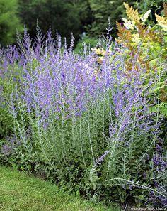 10 plantes faciles qui r sistent au manque d eau plantes pinterest jardins jardinage et. Black Bedroom Furniture Sets. Home Design Ideas