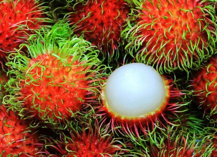 18 Craziest Tropical Fruits From Asia - Oola.com