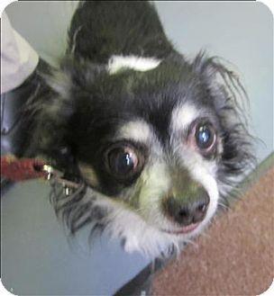 Dallas Ga Chihuahua Mix Meet 14 03 0585 Magic A Dog For Adoption Chihuahua Mix Pets Kitten Adoption