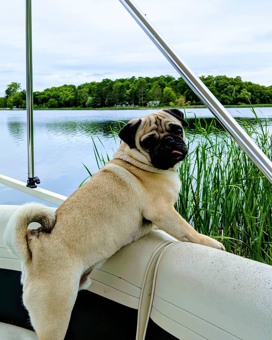 Pug On A Pontoon Bertjethepug Twogirlsandapug Mopshond