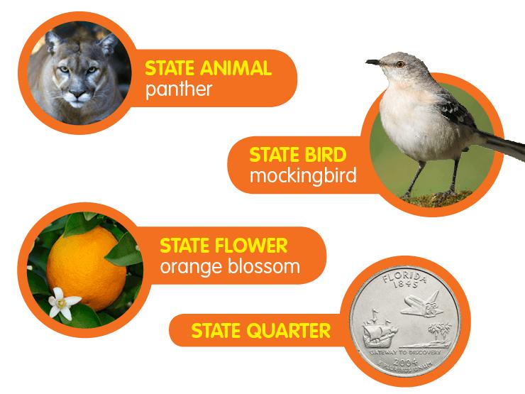 State Flower Orange Blossom State Bird Mockingbird State