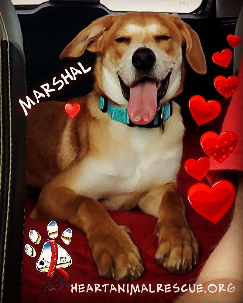 Adopt Marshal on Petfinder in 2020 Dog adoption, Pet