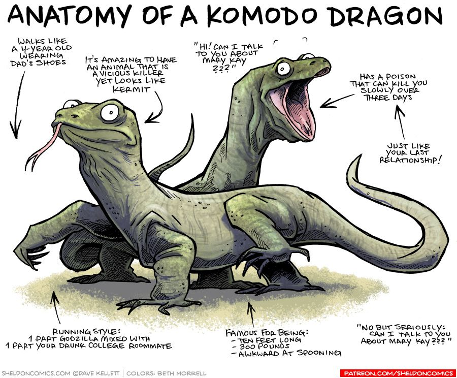 Anatomy Of A Komodo Dragon Reptile Pinterest Komodo Dragon