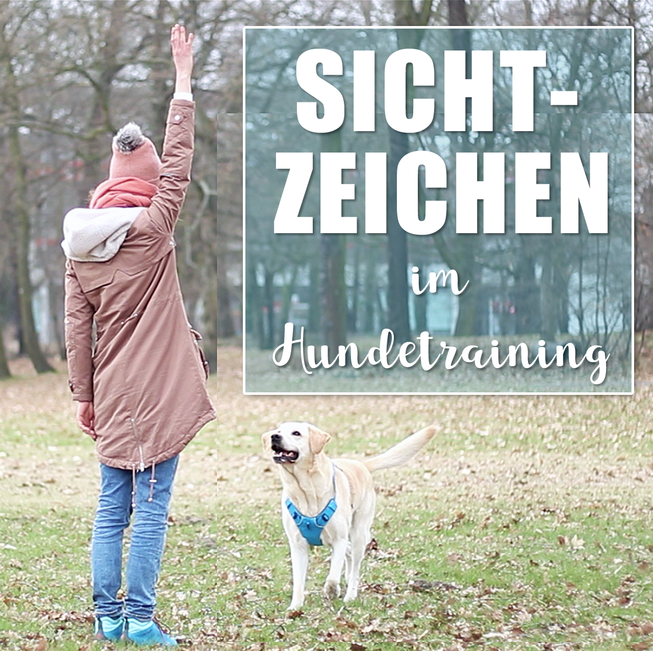 Hundetraining Mein Hund Hort Nicht Die Wichtigkeit Von Sichtzeichen Und Ruckruftraining Als Hundetraining Mi Hundchen Training Hundetraining Hundeerziehung