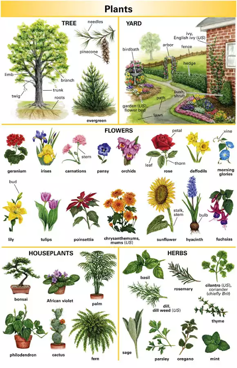 Plants Names In 2020 Plants Vocabulary Plants Animals Name In English
