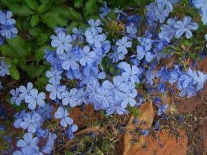 BluePlumbage_range_vertical-2304pi