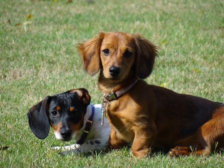 Vote For Sophie And Sadie Meet Sophie And Sadie Yes It Is Ok To