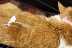 All About Kidney Disease In Dogs Cat Renal Failure