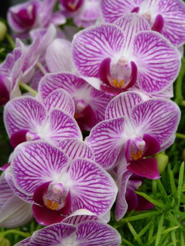 3b01bd7ce50644f302cce737d3a8c550 - Marnie's Pavilion Denver Botanic Gardens
