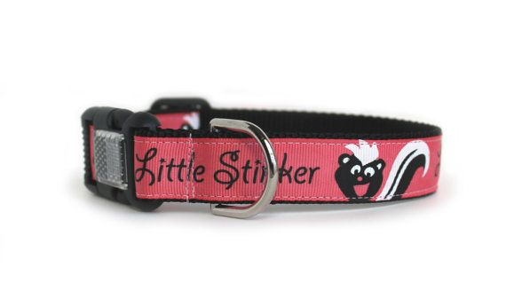Funny Dog Collar Pink Dog Collar Skunk Big Dog By Youhadmeatwoof