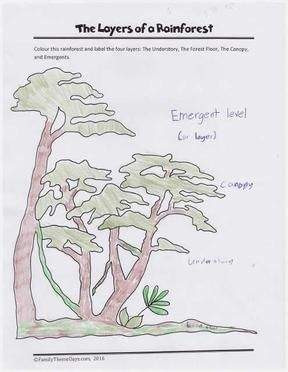 Brazil Theme Day Rainforest Learning Activity The Layers Of A