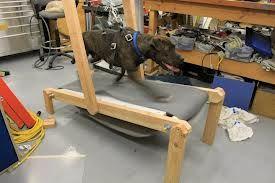 Homemade Dog Treadmill Dog Treadmill Homemade Dog Diy Dog Stuff