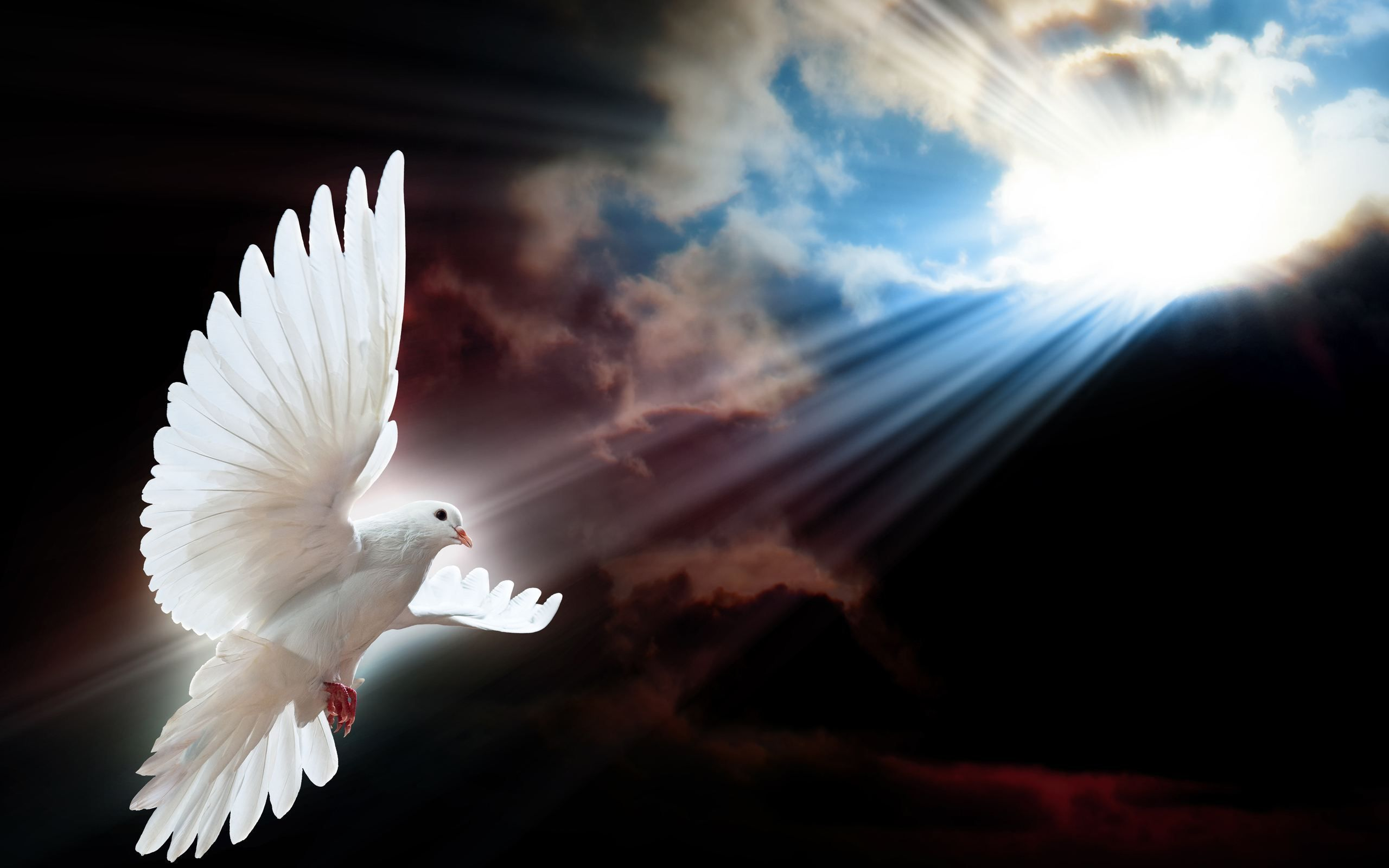 Dove Of Peace Google Search With Images Holy Spirit Birds
