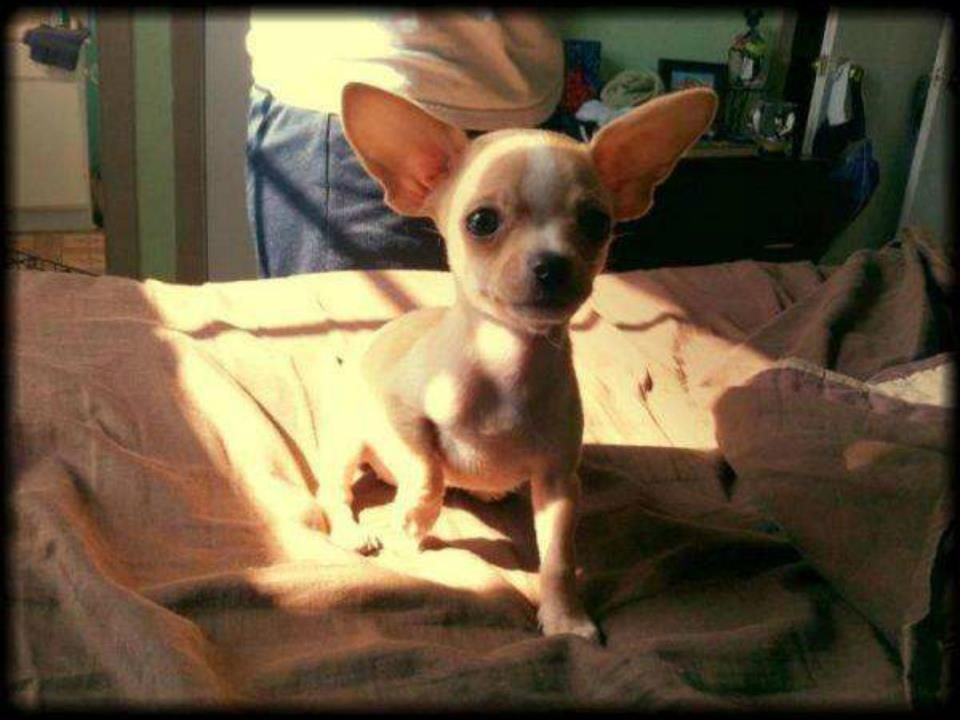 Missing San Antonio Tx Marbach Area This Is Lily She Slipped