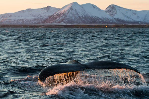 Whale Safari Northern Norway