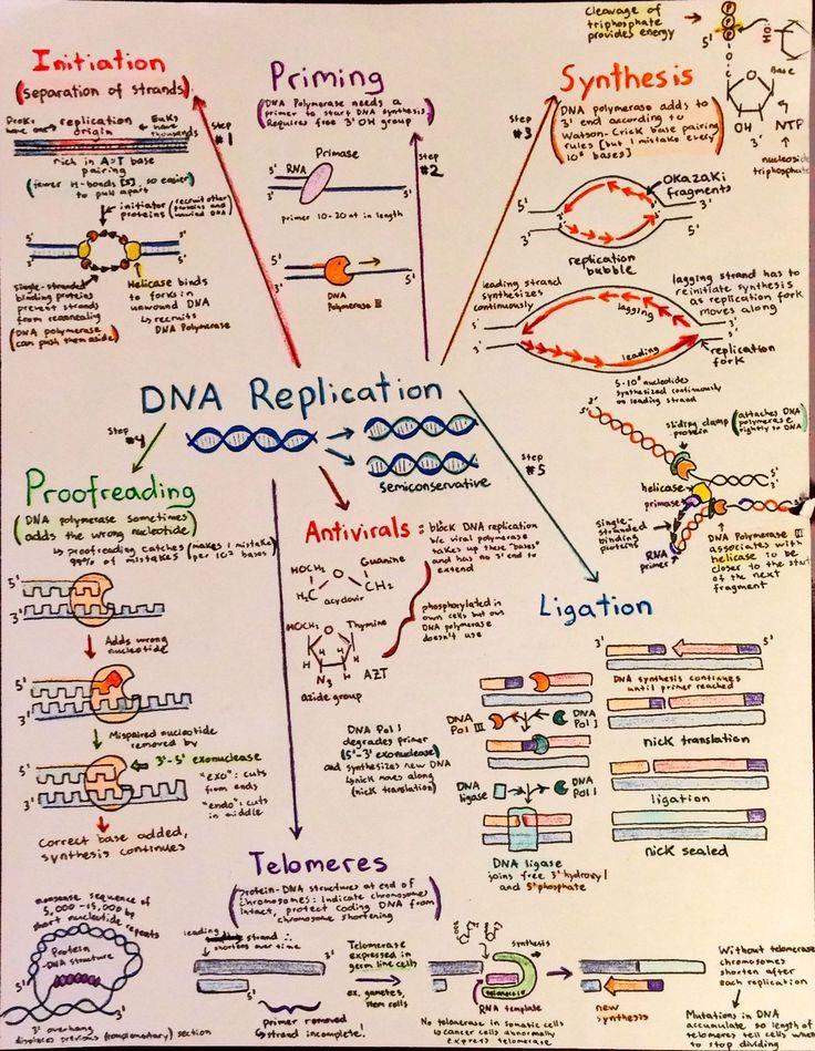 Introductory Biochemistry Flowcharts Biology classroom