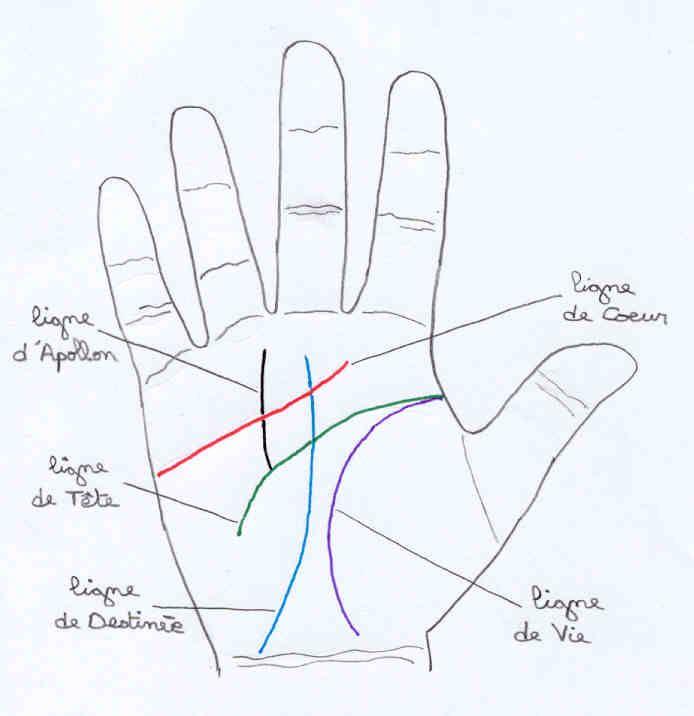 Les lignes de la main lignes de la main pinterest - Dessin de la main ...