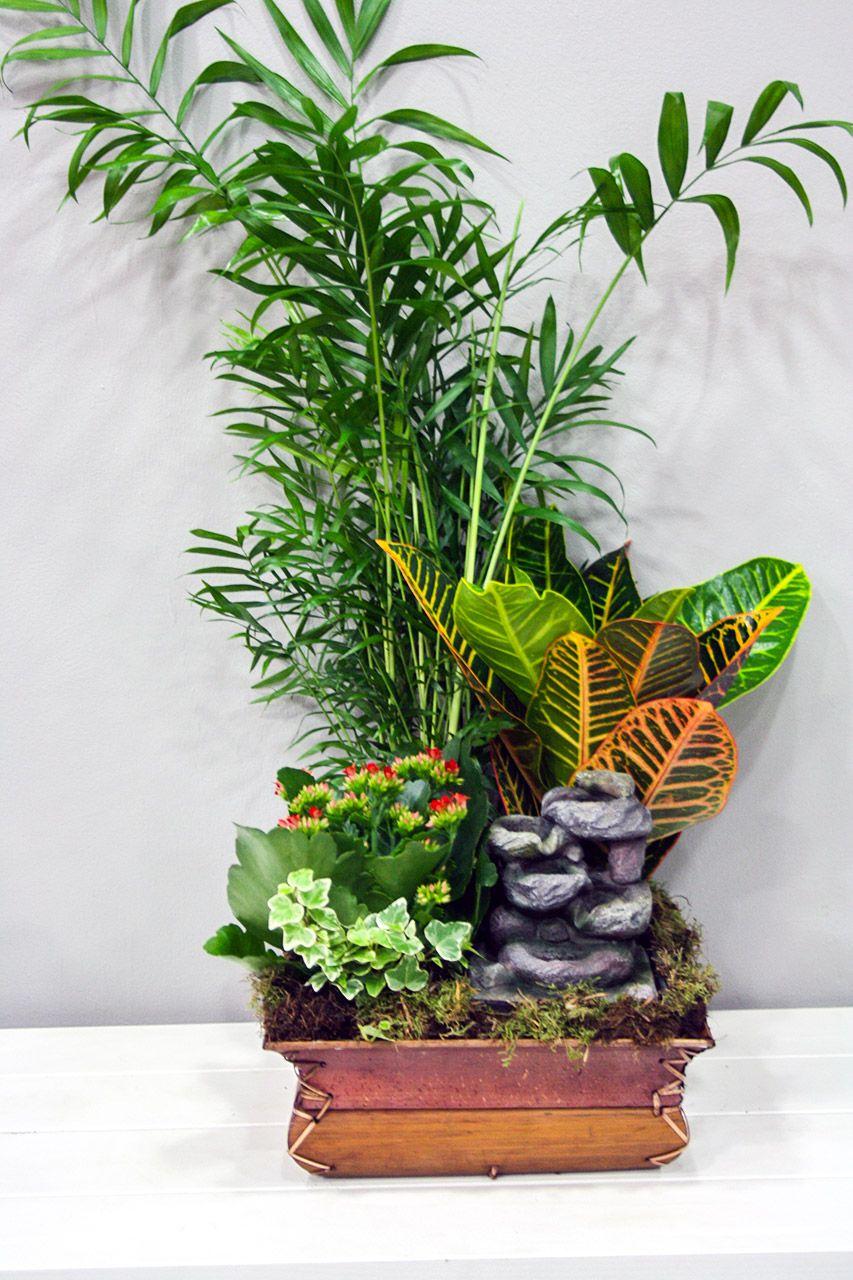 Composición De Diferentes Y Variadas Plantas De Interior En Una Base Cuadrada De Bambú Con Fuente D Plantas En Maceta Plantas De Interior Jardinería En Macetas