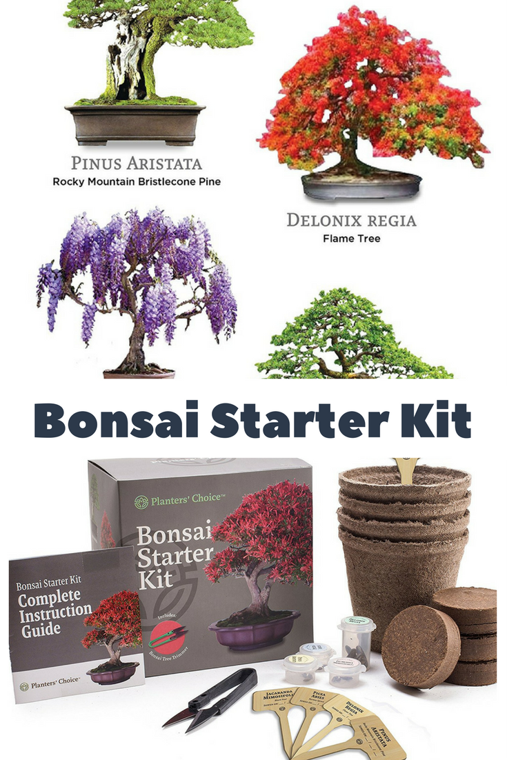 Bonsai Starter Kit The Complete Kit To Easily Grow 4 Bonsai Trees From Seed Bonsai Bonsaitree Ad Bonsai Tree Unusual Gardening Gifts Bonsai