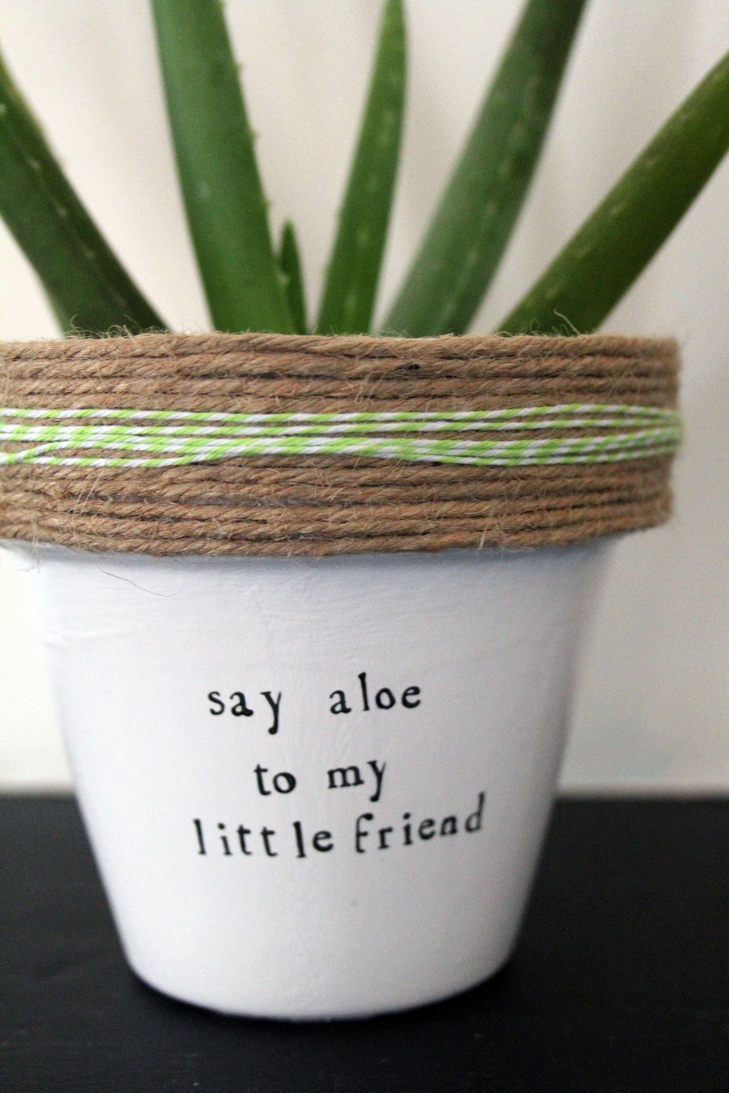 50+ Creative Succulent Planters You Can DIY