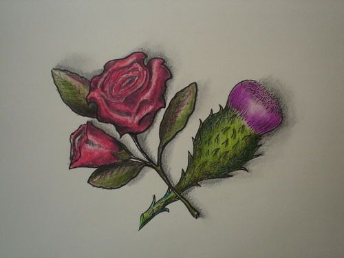 English Rose And Scottish Thistle Entwined