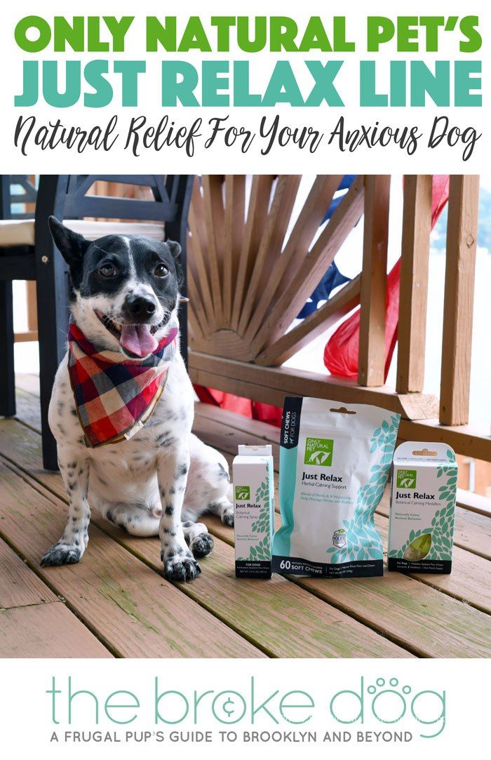 Pin On Pet Blogger Support Group