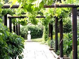 опоры винограда декоративные фото для