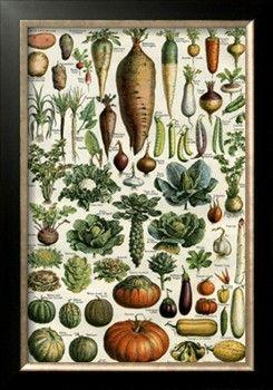Legumes Print at Art.com