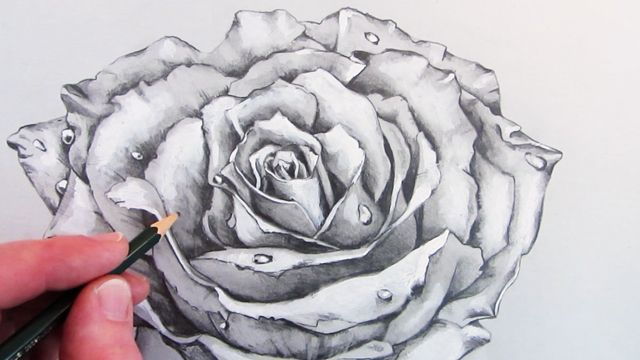 How to draw a rose narrated pencil drawing