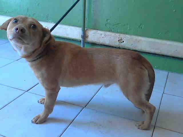 Gayweho Dogs 4 U On Dogs Labrador Retriever Small Dogs