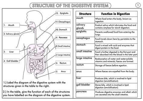 Gcse Biology Digestion Topic Resource Pack Updated Digestive