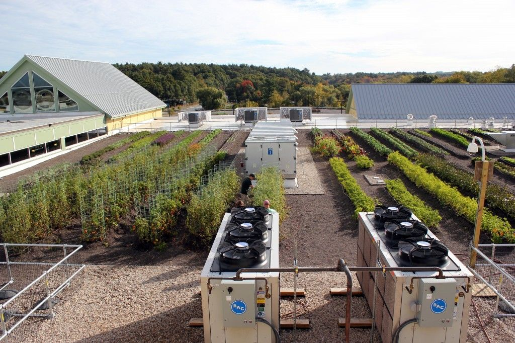 Whole Foods Rooftop Farm, Recover Green Roofs, Photo by