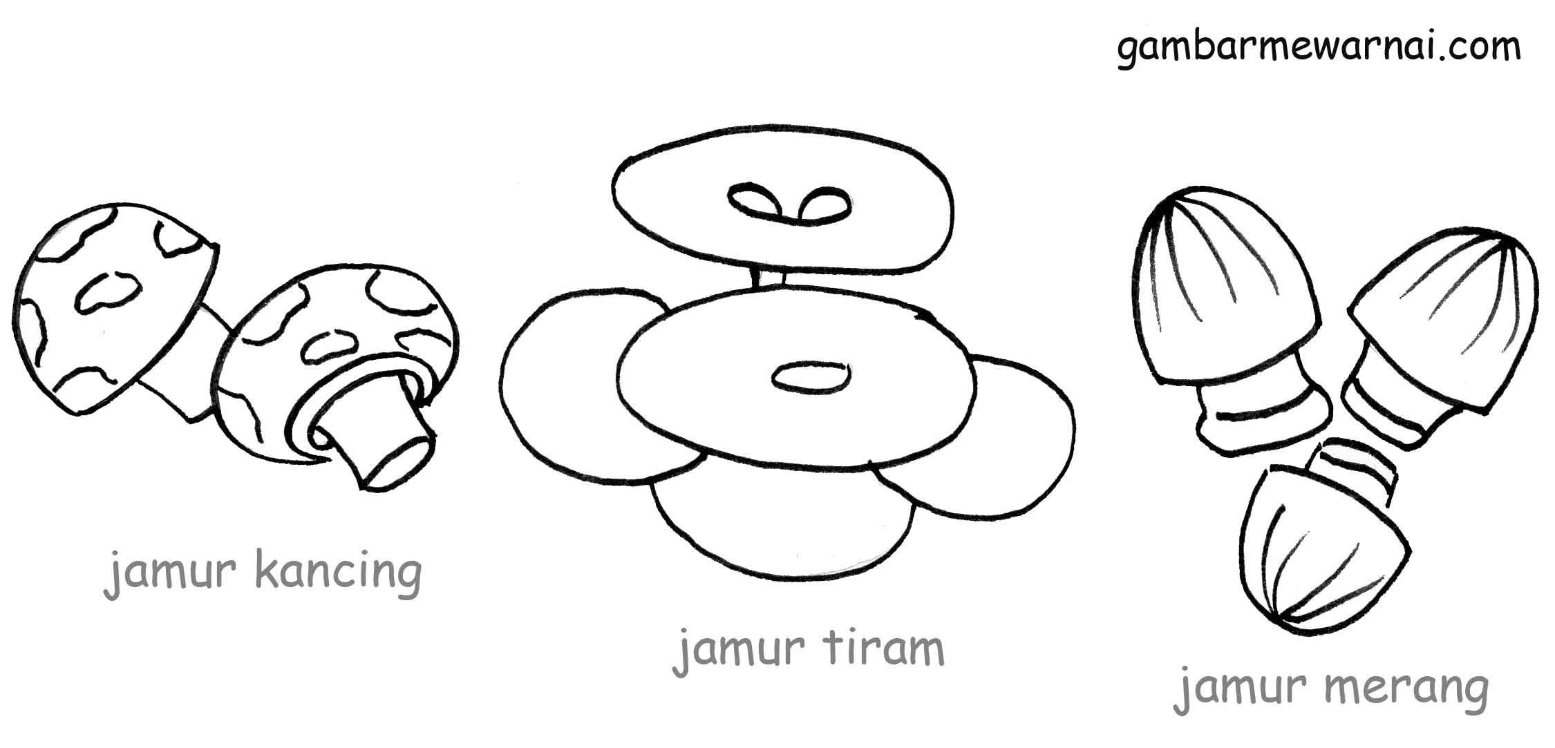 Sketsa Gambar Jamur Tiram