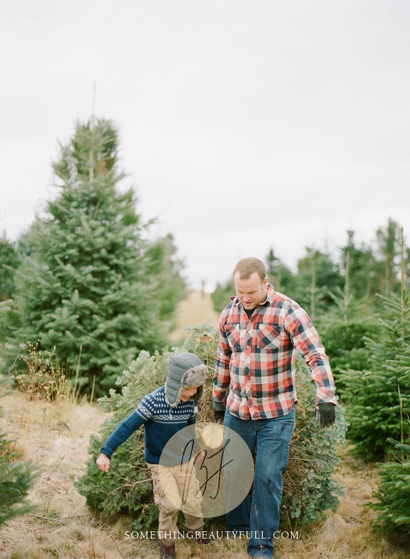 Hunt for the perfect Christmas tree