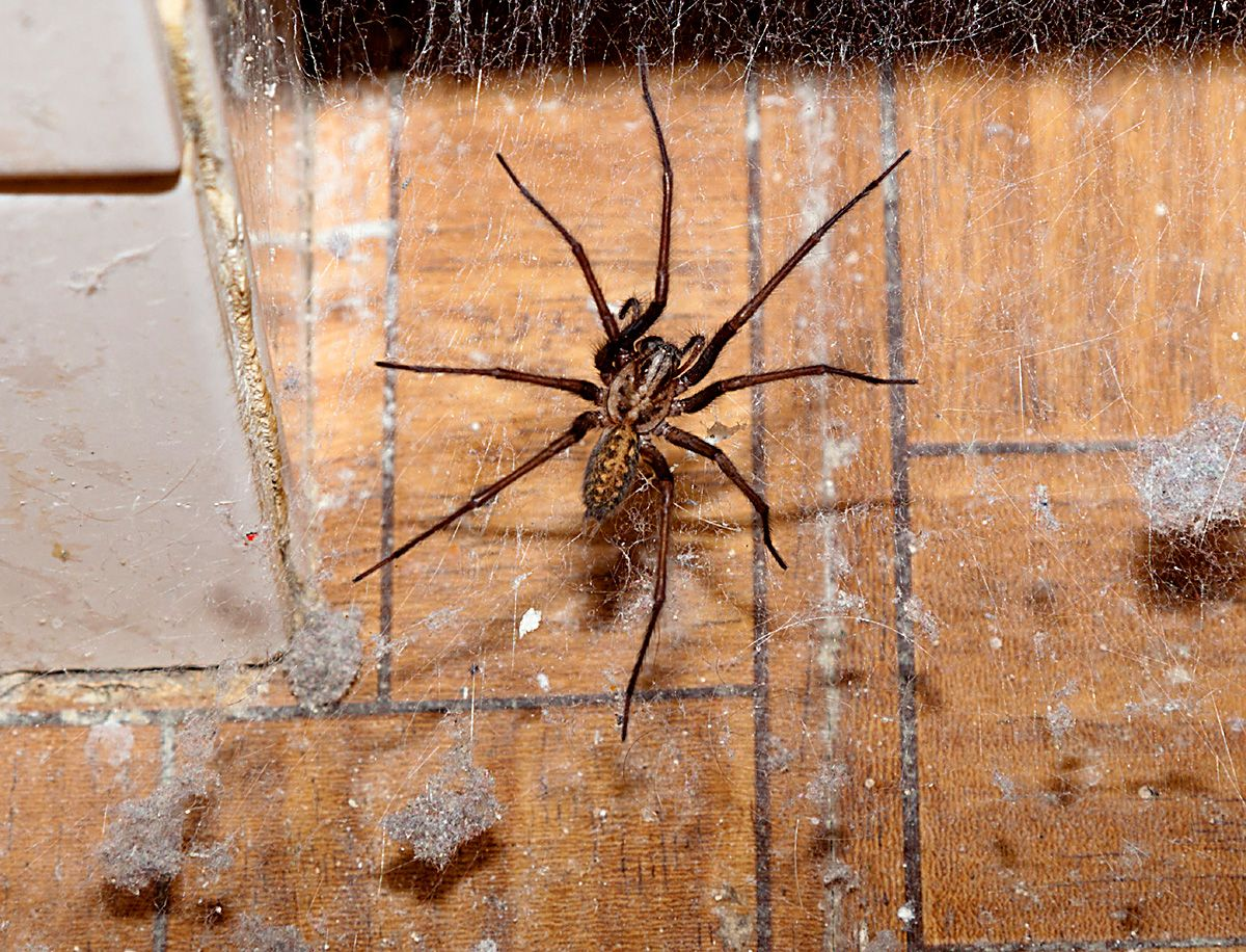 How to get rid of spiders in the house get rid of