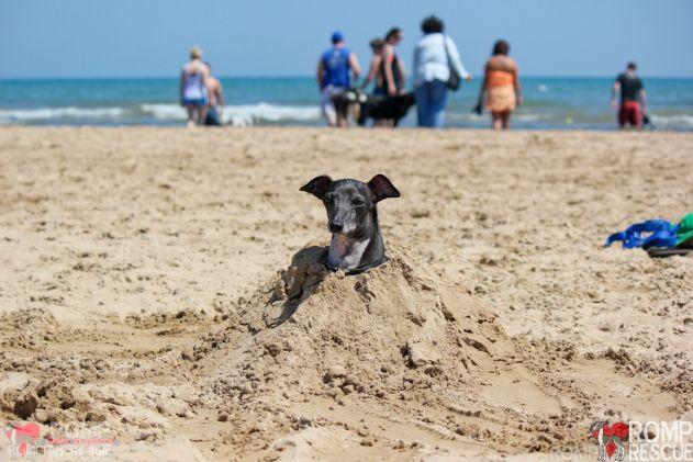 Montrose dog beach, chicago dog beach, illinois dog beach