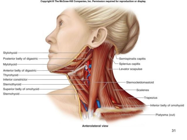 38 Awesome Anterior Neck Muscles Images Humans Pinterest