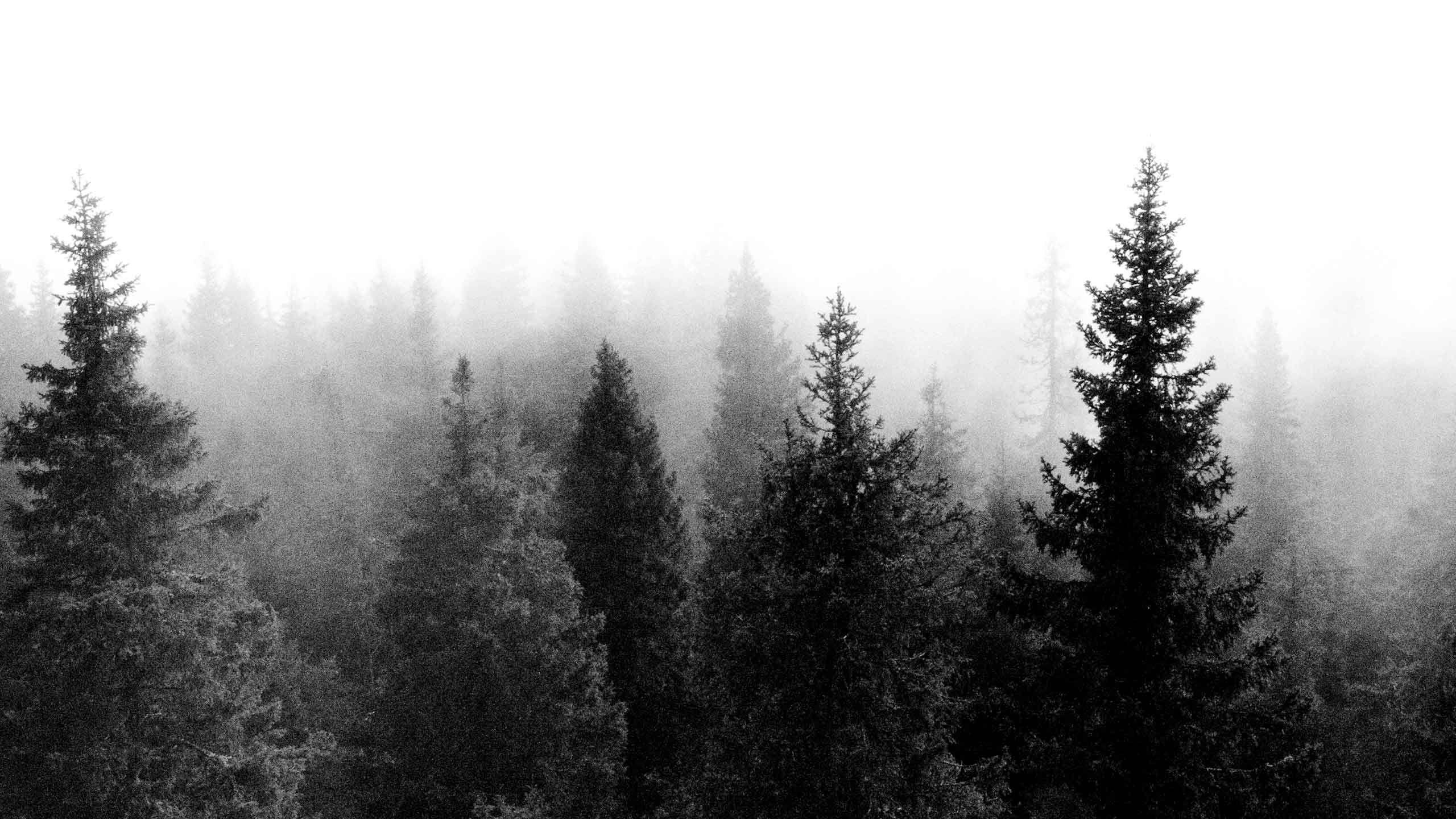 Permalink to Forest Desktop Wallpaper Tumblr