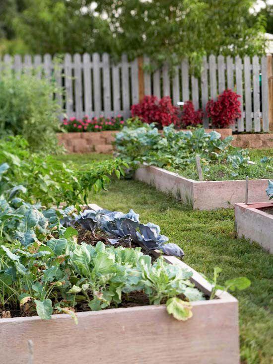 grow a vegetable garden in raised beds garden organic ideas rh pinterest co uk