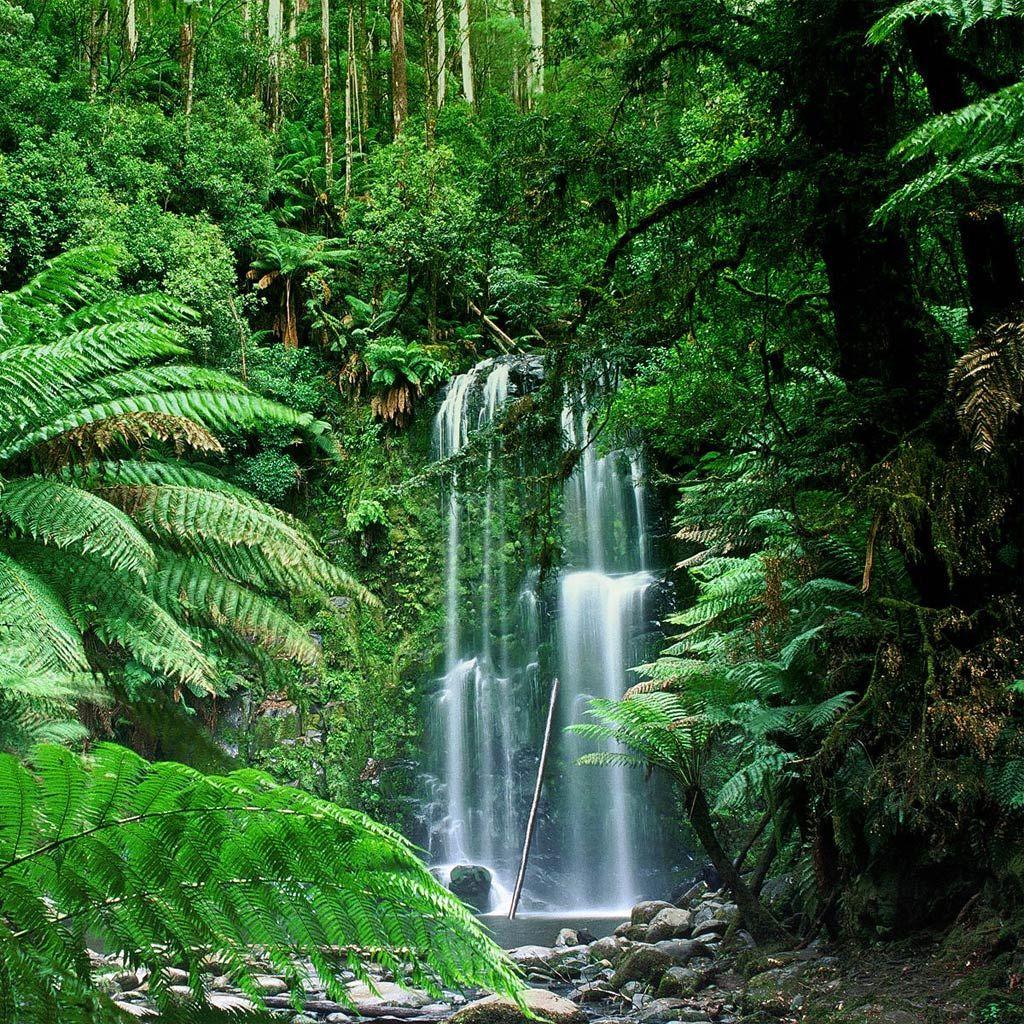 Australia Victoria Beauchamp Falls Biomas Bioma Natureza Incrivel